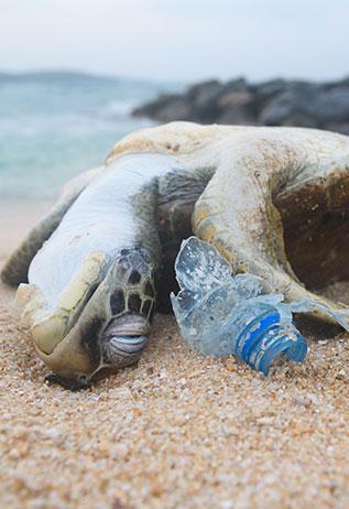 pollution plastique passez au charbon actif pour éviter l'extinction des tortues